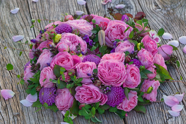 Summer Romance™ rose bush